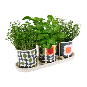 Set of 3 Herb Pots and Tray - Big Spot