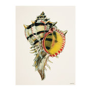 conch-shell-print-green-black-30x40cm