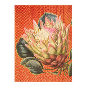 protea-flower-print-orange-30x40cm