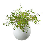 doreen-wall-planter-white