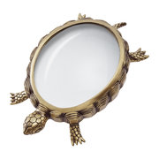 turtle-magnifying-glass