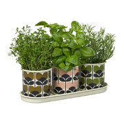 set-of-three-herb-pots-and-tray-climbing-rose