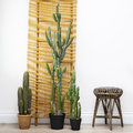 Parlane - Potted Desert Cactus - Large