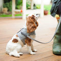 Mutts & Hounds - Stoneham Leather/Tweed Lead - Wide