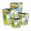 Baobab Collection - Cities Scented Candle - Singapore - 10cm