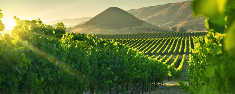 USA wine region