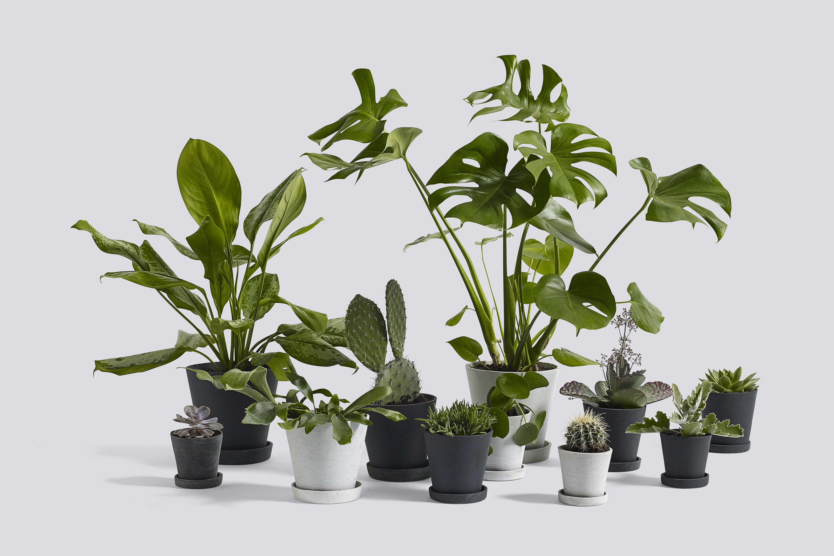 How To Decorate Your Interior With Plants