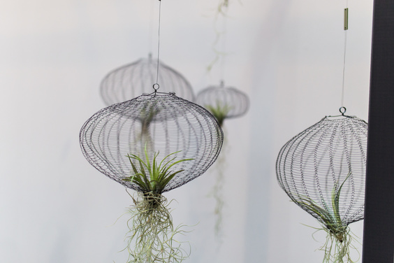 Air plants hanging in net