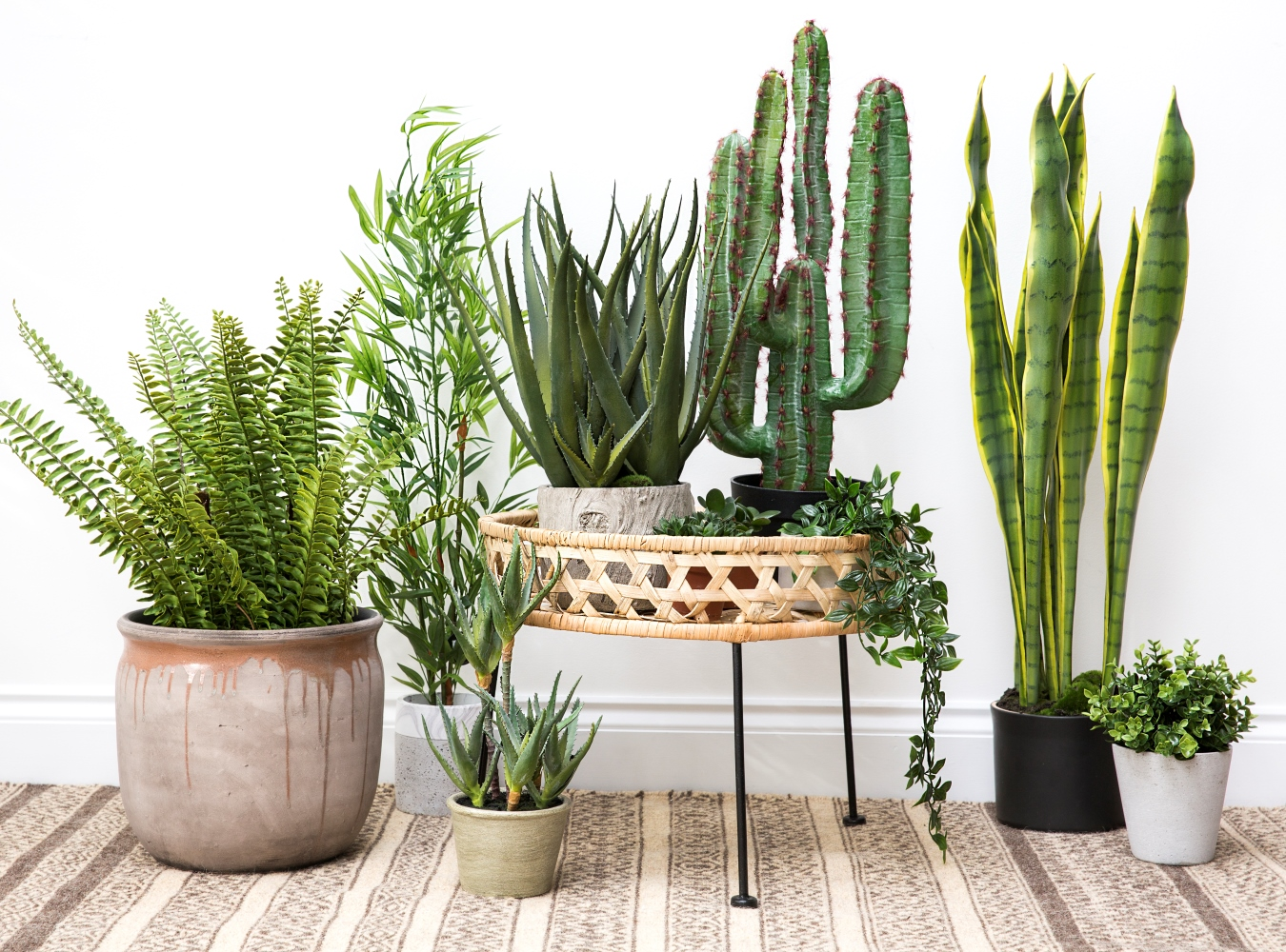 The Botanical Trend Top 10 Houseplants You Cant Kill