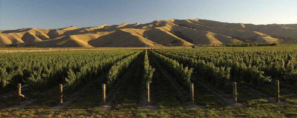 new zealand wine region